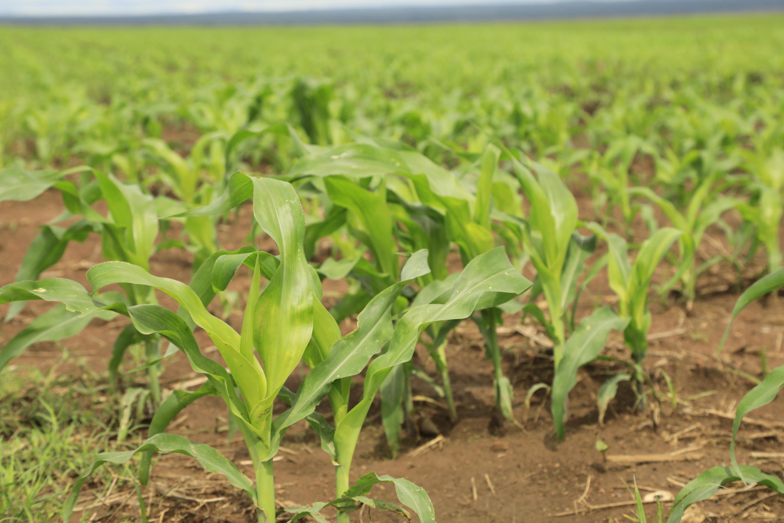 Visite du site agricole de Kando